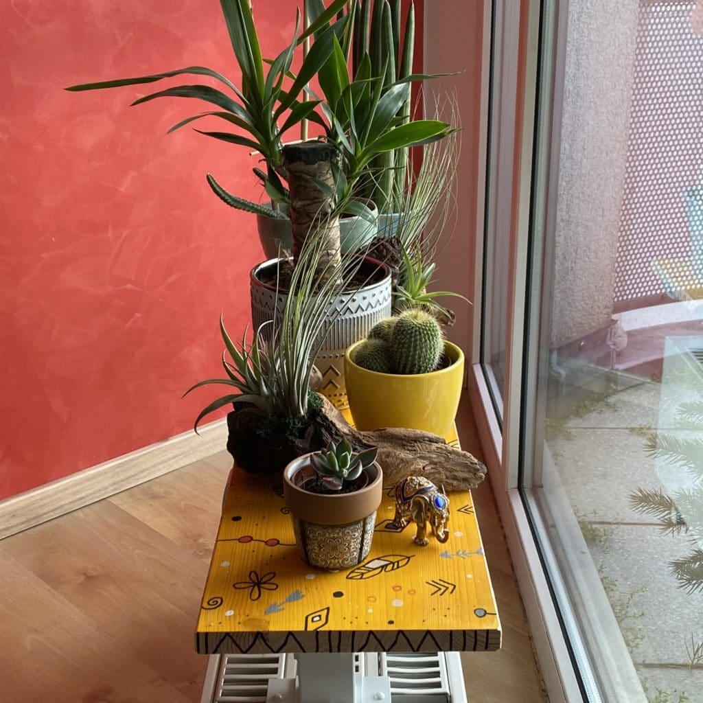 Boho Pflanzen Deko